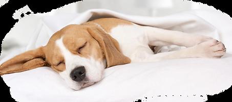 Sleeping-Dog v3.png