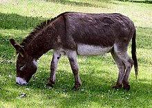 220px-Donkey_1_arp_750px.jpg