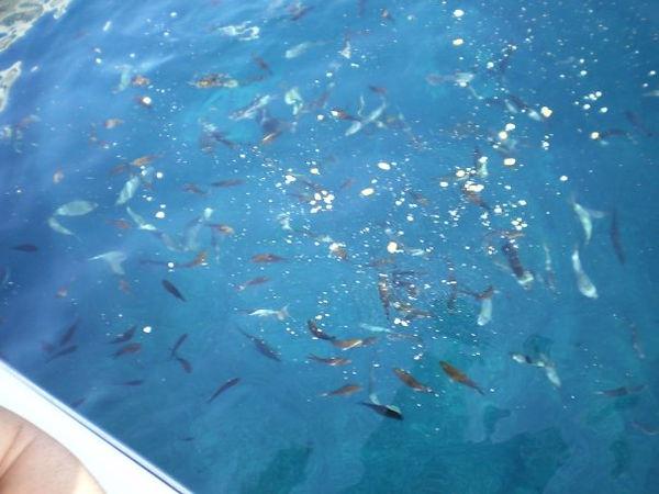 sicilianfish.jpg