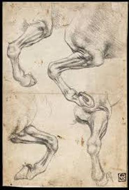 horses leg by Leonardo.jpg