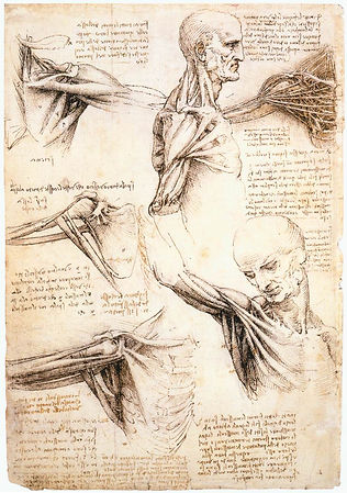 Leonardo_da_Vinci_-_Anatomical_studies_o