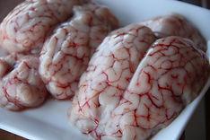 lamb brains.jpg