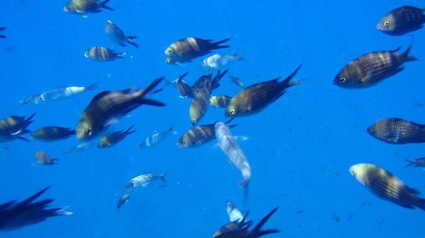 Feeding the Fish, euroclub schools.jpg