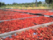 PomodoriSecchi.jpg
