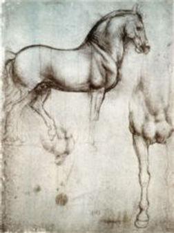 Study_of_horse.jpg