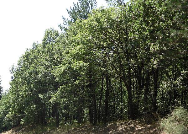 etnaforests.jpg