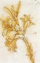 lily.Leonardo.jpg