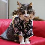 Kimono de Gato.jpg