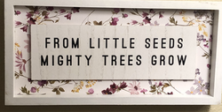 From little seeds mighty trees grow