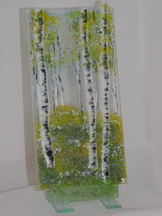 Birch tree trio.JPG