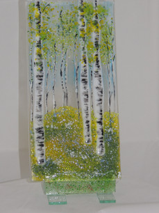 part of a trio of birch trees.JPG