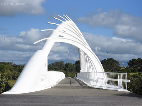 Jess is a Wanderer in New Plymouth