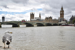 Distant Westminster
