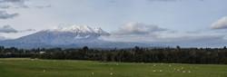 Mount Ruapehu Distant