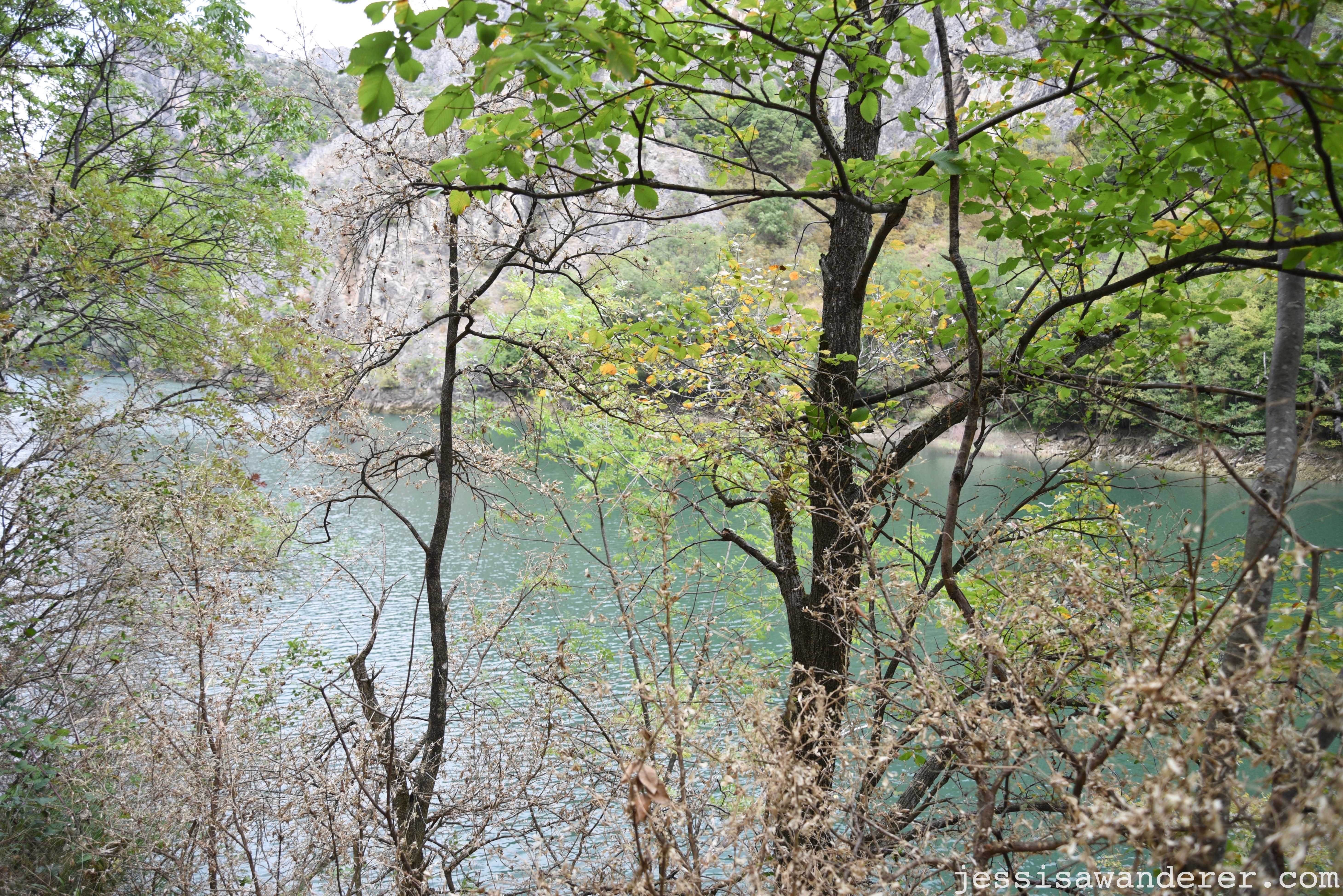 Through the Trees at Matka