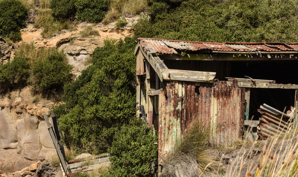 Old Boat Shed at Shag Point