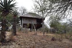 Our Safari Treehouse