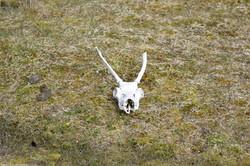 Reindeer Remains