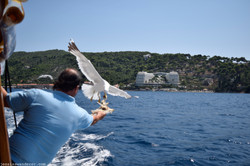 Captain John Feeds the Birds