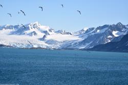 Mountains & Birds