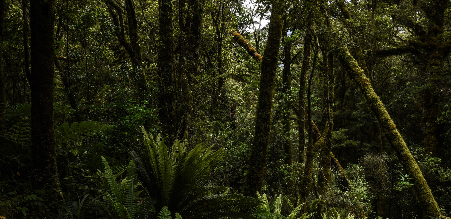 Chasm Jungle