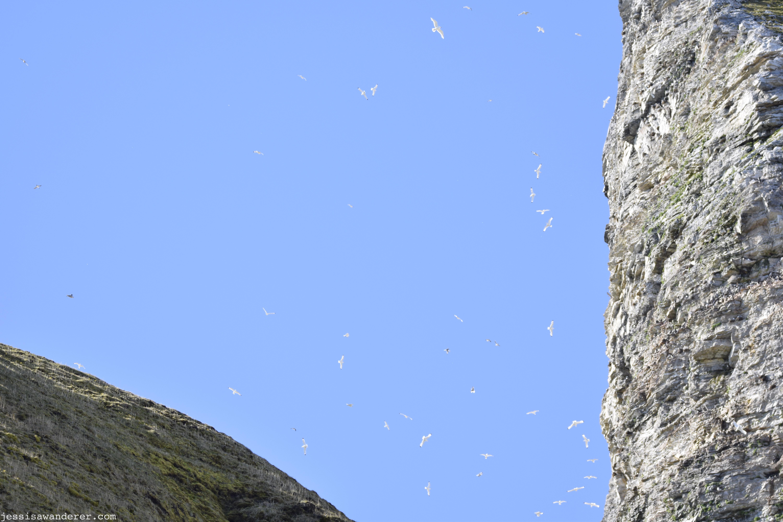 Kittiwake Cliff