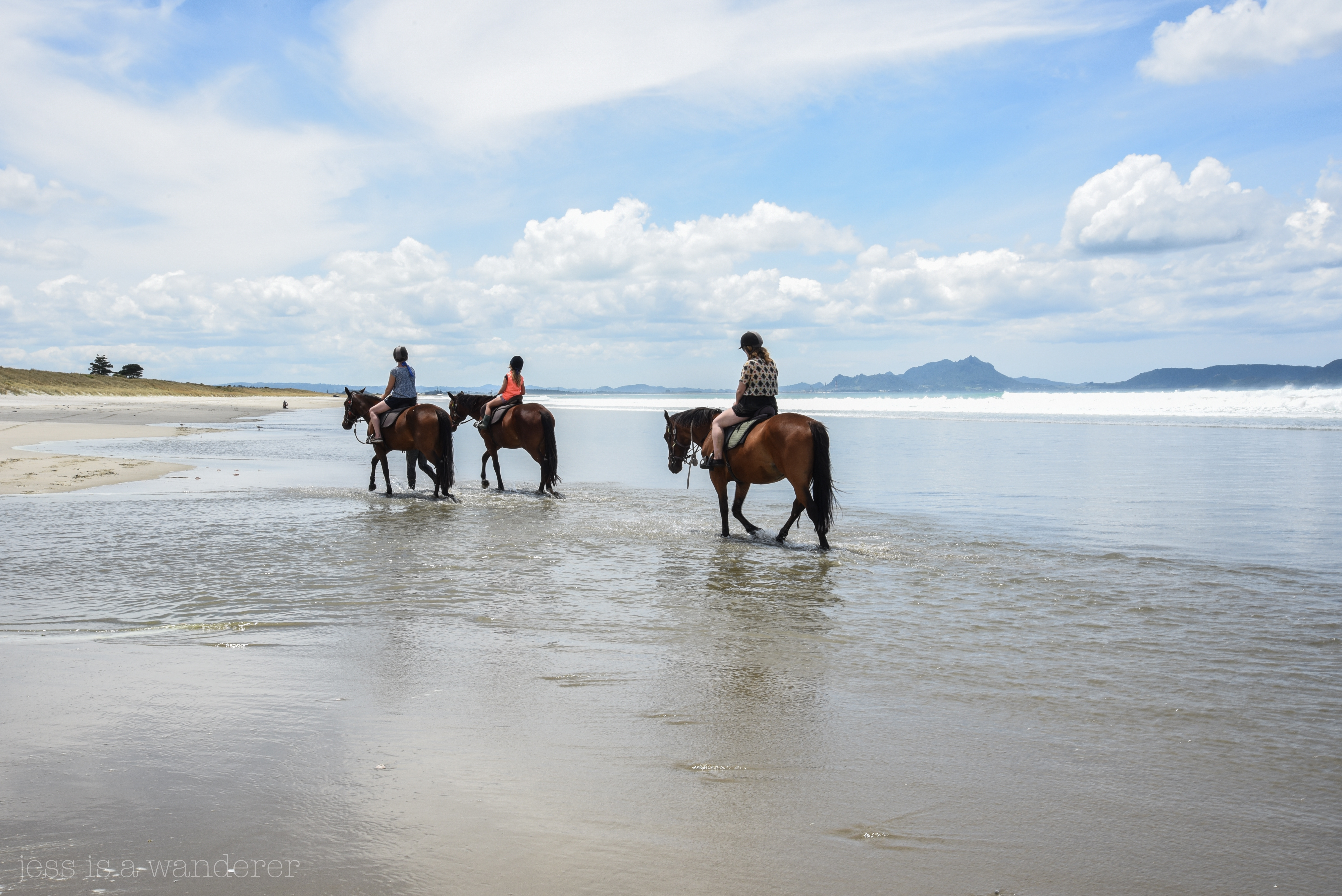 Horse Trekking in Waipu