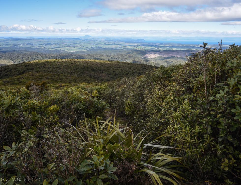 Mount Pureora Summit