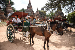 Horse and Cart Rides on Offer