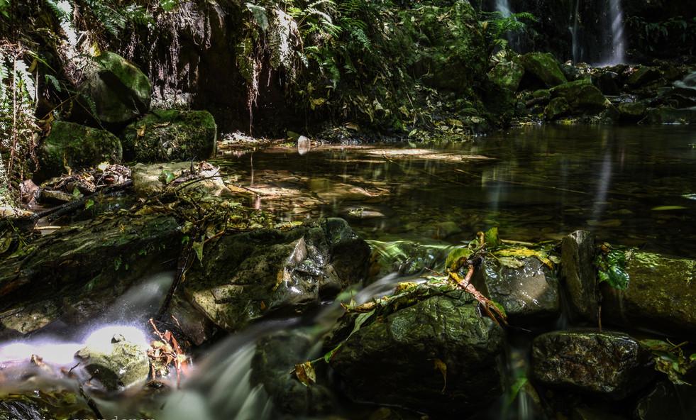 Kelceys Bush River
