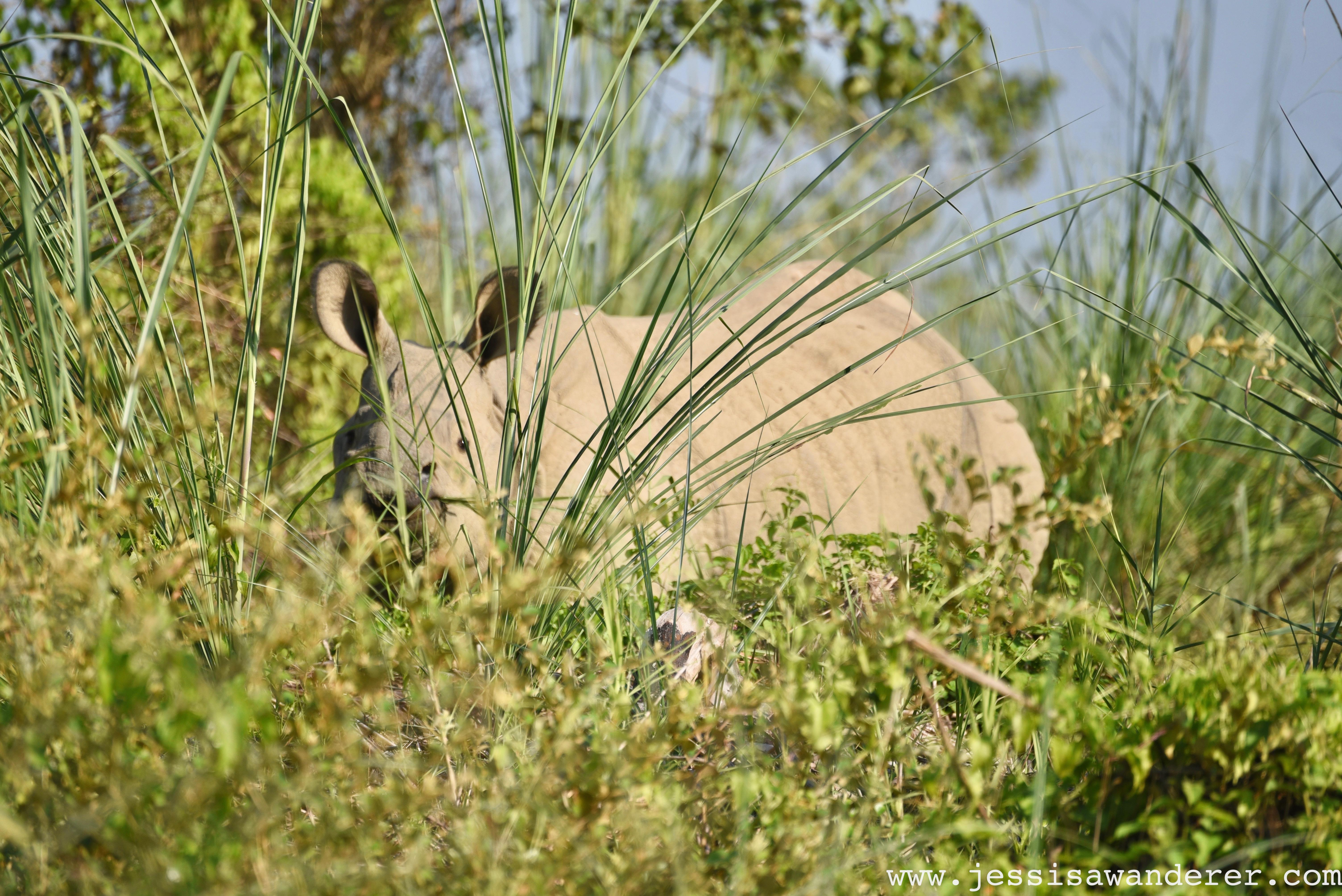 Hide and Seek Rhino