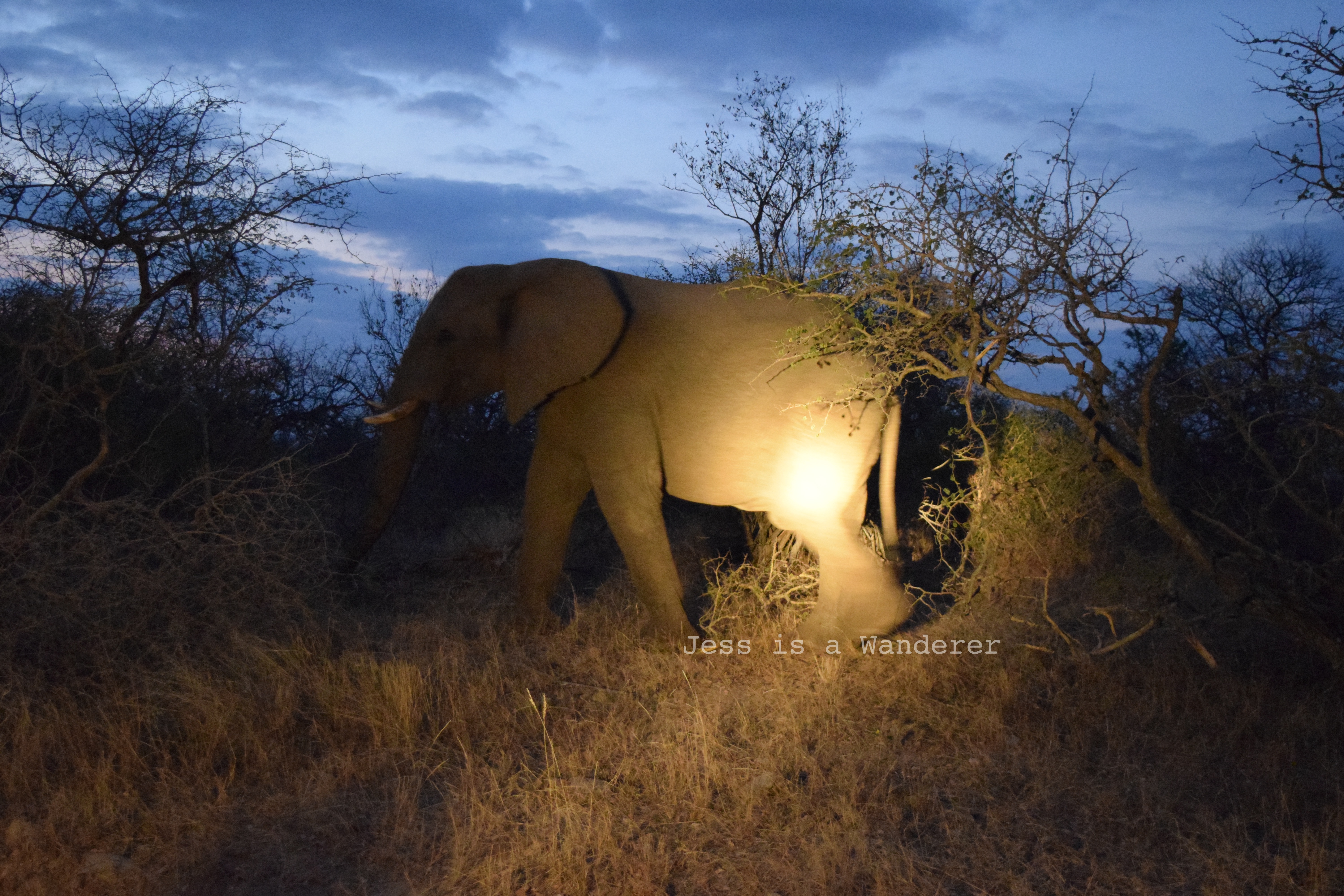 Early Morning Elephant Watching