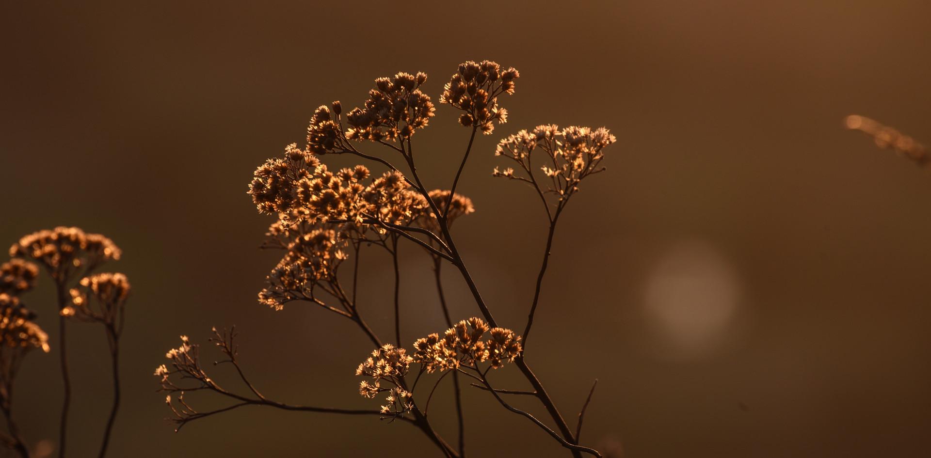 Sunlight Fauna