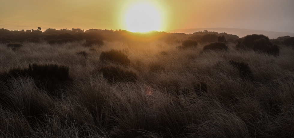 Sunrise, sunrise...