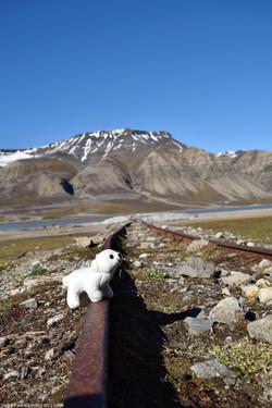 Polar Bear on Tracks