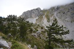 Treetop Peaks