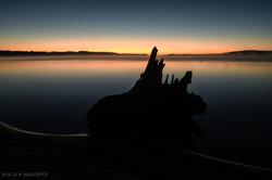 Log Silhouette
