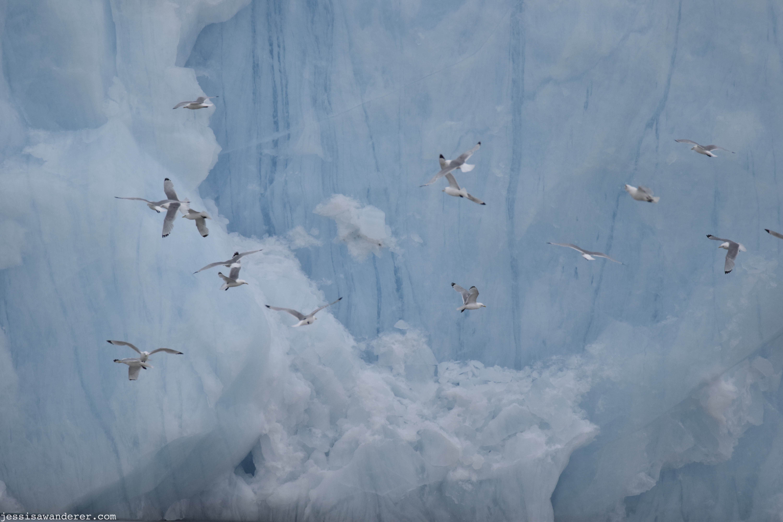 Glacier & Birds