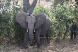 Hello Elephant!