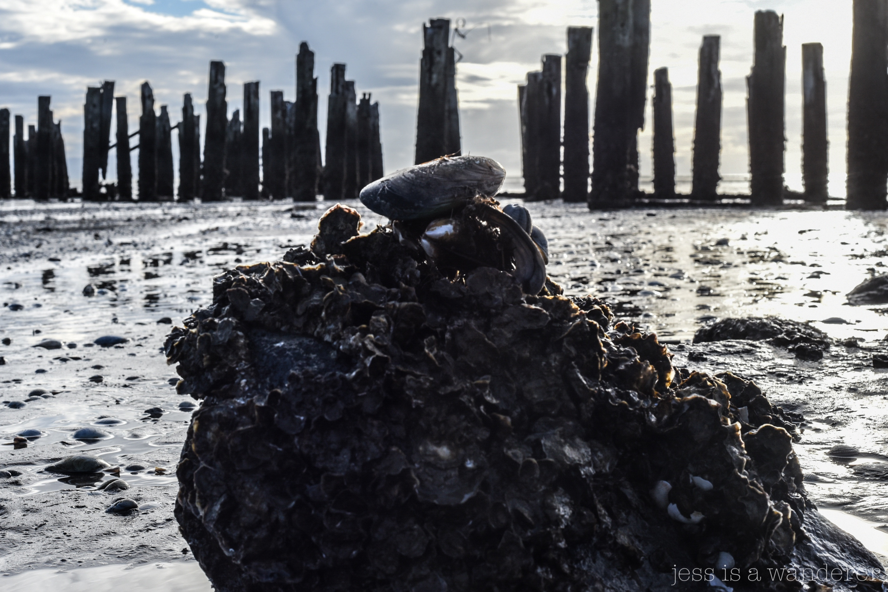 Rocks, shells and posts