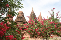 Flowers and Temples