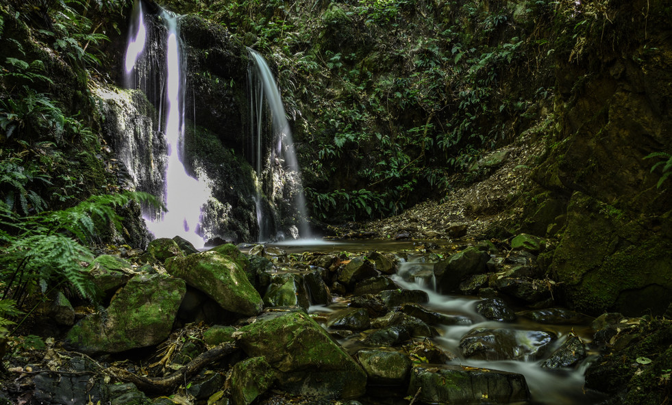Kelceys Bush Stream & Falls