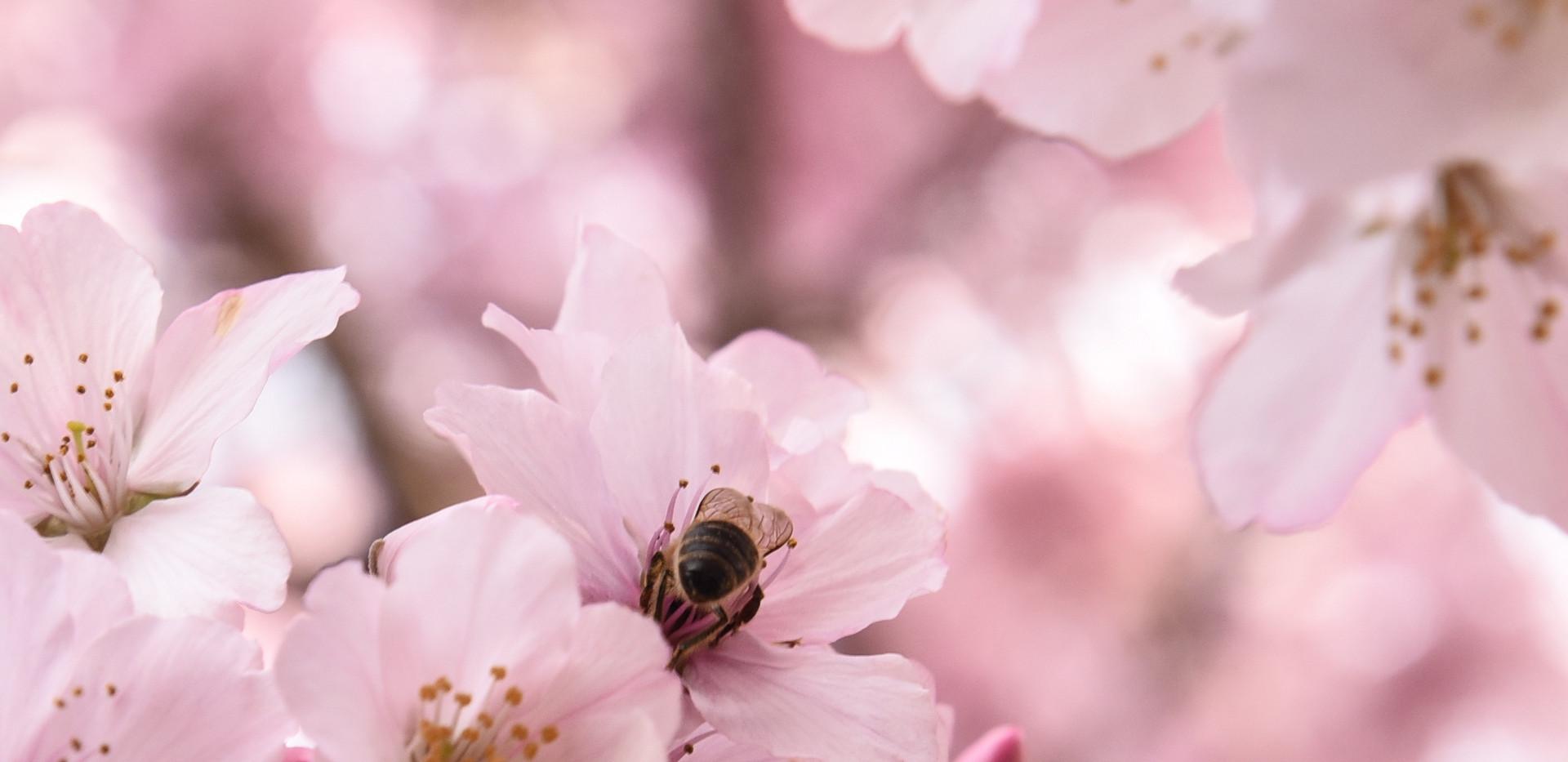 Bumblebee Booty