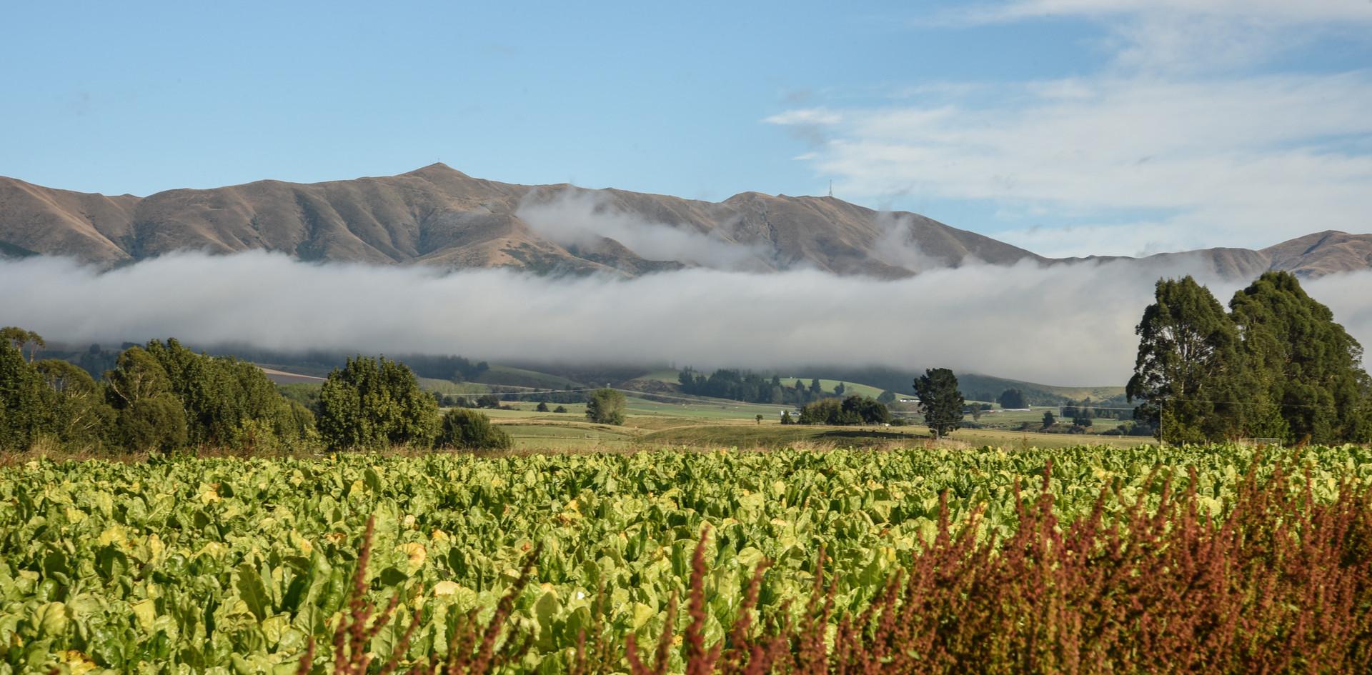 Hunter Hills Mist