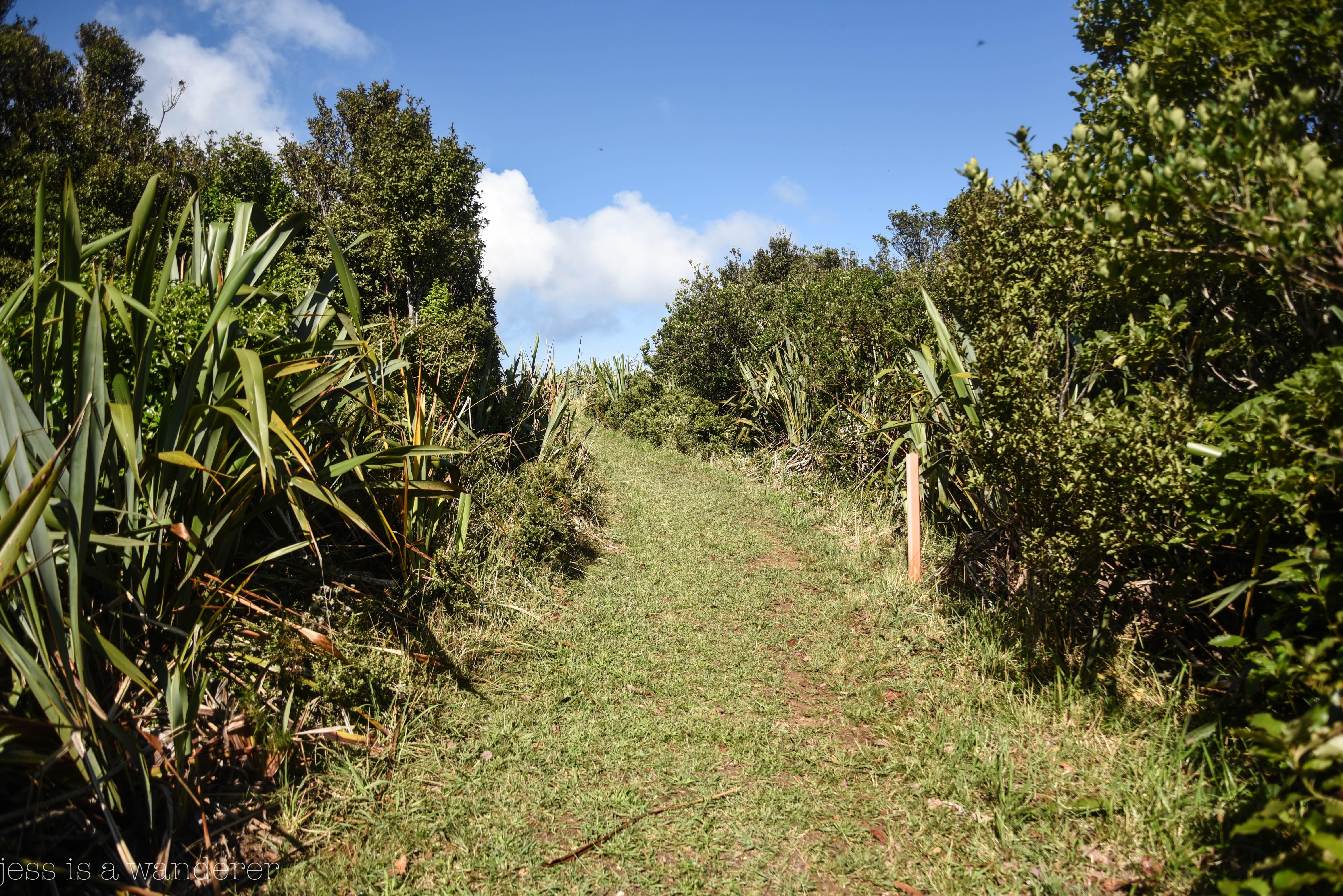 Jess is a Wanderer Hikes Maunganui Bluff