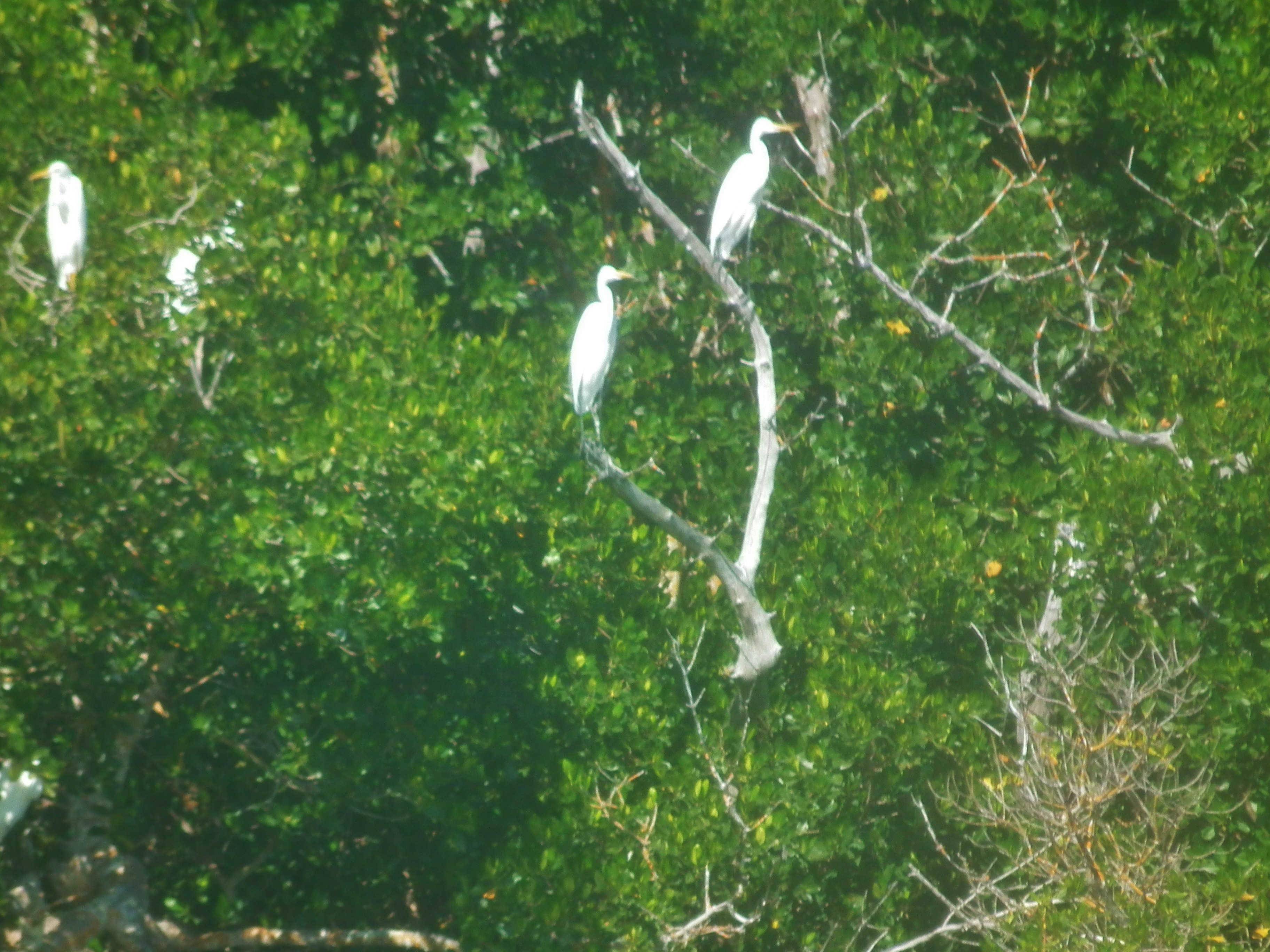Bird Watching in the Everglades