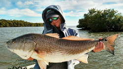 Red Fish in the Everglades