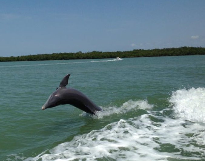 Discover Dolphins in the Ten Thousand Islands
