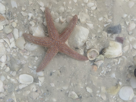 Discover Shelling and Wild Life in Ten Thousand Islands