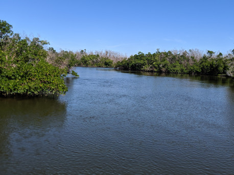 Discover mangrove canals in the Ten Thousand Islands